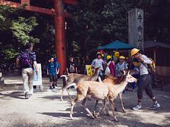 Nara Park () Tags: japan panasonic  nara  dg15 gx7 15mmf17