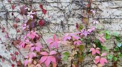 Herbst (deta k) Tags: