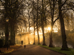 Morning walkies (Mike Ashton) Tags: morning trees mist sunrise dawn shropshire riverside path walk olympus shrewsbury avenue limes em1