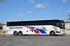 Greyhound Bus Lines 64043 (redfusee) Tags: gli