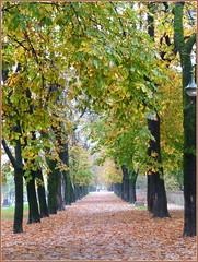 VIALE SULLE MURA di citta' novembre e piove (aldofurlanetto) Tags: novembre mura pioggia citta viale