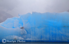 Spencer Lake 8-9-14 Chugach National Forest-Anchorage AK (32) (moelynphotos) Tags: nature alaska glacier iceberg wilderness icesculptures blueice beautyinnature chugachnationalforest spencerlake moelynphotos savetheice