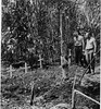 Three graves to Lae - WW2 (Aussie~mobs) Tags: lae newguinea graves ww2 soldiers aif anzac bomb crater cross lestweforget
