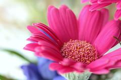 Bright colors (miwa kai) Tags: life light summer flower color macro colorful jun