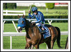 Private Zone (EASY GOER) Tags: horses horse ny newyork sports race canon track running racing 5d athletes races thoroughbred equine markiii