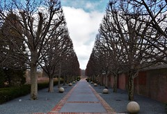Lined lane (marensr) Tags: chicago botanic garden path lane trees gravel topiary spring branches bare march blue sky clouds