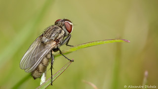 The Fly (2)