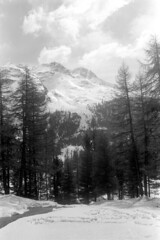 04a3371 22 (ndpa / s. lundeen, archivist) Tags: nick dewolf nickdewolf bw blackwhite photographbynickdewolf film monochrome blackandwhite april 1971 1970s 35mm europe centraleurope switzerland swiss alpine alps graubünden grisons stmoritz easternswitzerland suisse schweitz mountains peaks snow snowy snowcovered skiresort skiarea skislopes landscape trees swissalps