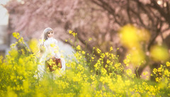 春の訪れ (のの♪) Tags: dd dollfiedream sakura 桜 白ワンピース 菜の花