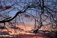 Fractal sky (marensr) Tags: april sunset tree branches pink peach blue orange light clouds sky heavens