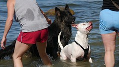 Facial Expressions (swong95765) Tags: dogs dog water wet play ladies lake scene expressions faces fetch retrieve