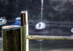 Yacht by natures photoshop (m barraclough) Tags: gate river canon100d canon spiderweb nature yacht boat