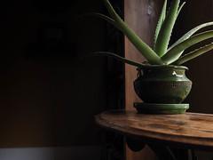 vera (PenelopeEfstop) Tags: naturallight windowlight aloevera antique home houseplant interior shadow stilllife succulent