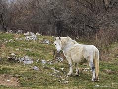 Konačno krenulo proljeće (MountMan Photo) Tags: konji novivinodolski visokipredjeli primorskogoranska croatia landscape