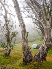 "my tent in the clouds • <a style=""font-size:0.8em;"" href=""http://www.flickr.com/photos/44919156@N00/33350043180/"" target=""_blank"">View on Flickr</a>"