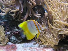 00734923 Aquarium Berlin 1 - 2017 (golli43) Tags: aquariumberlin zoo fische krokodile quallen wasser wasserpflanzen amphibien insekten unterwasserwelt