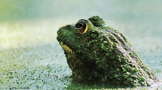 toadally unfrogettable