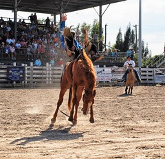 P3110162 (David W. Burrows) Tags: cowboys cowgirls horses cattle bullriding saddlebronc cowboy boots ranch florida ranching children girls boys hats clown bullfighters bullfighting