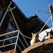 Gatos de rua por todos os lados