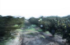 a v e l l a n o (creonte05) Tags: explore eduardomiranda nikon d7100 flickr 2017 chile curico color campo blur bco verde art arbol green arte romeral avellano ngc