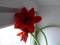 P1030479 (mjaniec) Tags: red czerwony