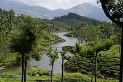 Beauty of Munnar, Kerala (Sam_sush) Tags: kerala godsowncountry munnar hillstation river tealeaves teaestates mountains landscape nature beautiful nikkor nikon 70300mm afp f4563 d3300 1855mm f3556 india