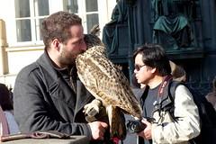 Entertaining the Public (Hythe Eye) Tags: prague praha czechrepublic streetentertainers charlesbridge falconer owl longearedowl