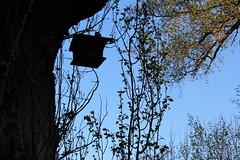 Qualcuno volò sul nido del cuculo (LodiceAli) Tags: bright 7dwf leaves nature gold sakura springtime plants flora colorful contrast
