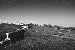22nd Landscape (ZCyrB) Tags: black white mexico isla mujeres grain monochrome landscape grass gray travel nature