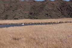 DSC03610.jpg (taarhaug) Tags: parker arizona unitedstates us