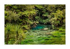 Putaruru Blue Spring - New Zealand (dominicscottphotography.com) Tags: putaruru bluesprings tewaihouwalkway springs water blue green clear newzealand northisland sony ilce7rm2 a7rm2 a7rmii sel2470gm leefilters polariser dominicscott