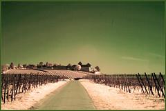 2017 04 09 Johannisberg IR - 16 (Mister-Mastro) Tags: johannisberg schloss rheingau hessen germany hessia castle vineyard wine street road