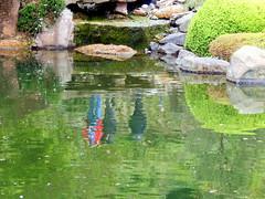 Reflexion (SIGMA 12) Tags: japanischergarten spiegelungen