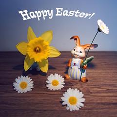 Happy Easter! (ingrid eulenfan) Tags: happyeaster froheostern dekoration stillleben stilllife osterhase blumen margeriten margerites narzisse flower
