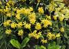 2017-03-19_0079n_waldor (lblanchard) Tags: 2017flowershow displaygarden waldor