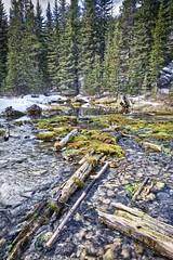 Springs source Beaver ponds (John Andersen (JPAndersen images)) Tags: beaverpond bluesky creek elbowfalls kananaskis landscape logs morning snow springs trees water