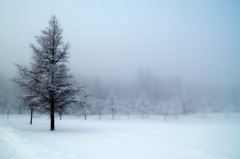 A Northender's dream (Captions by Nica... (Fieger Photography)) Tags: blue weather winter serene snow storm fog foggy misty mist trees tree nature path parc outdoor cold quebec canada