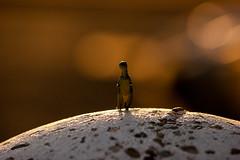 Stromlo Sunset (DrSchabbs) Tags: dinosaur australia canberra rhys act davies australiancapitalterritory rhysdavies drschabbs