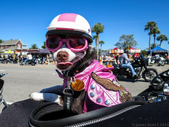 20141018 S120 Biketoberfest 49 (James Scott S) Tags: beach bike canon scott james october florida s run moto motorcycle biker fl daytona rider biketoberfest 2014 s120