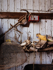Trophies (Citizen 4474) Tags: old net wall wisconsin barn trash rural canon skull fishing junk mail farm interior teeth hunting rope deer antlers mount stuff rod hanging hunter postal usps buck trophies package subjects clutter charger miscobjects 60d
