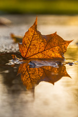 Then Came The Rain... (Vemsteroo) Tags: autumn sunset wild urban sunlight macro reflection fall nature leaves rain weather closeup canon puddle evening leaf bokeh pavement 100mm backlit f28 autumnal westmidlands solihull fallcolours bruetonpark