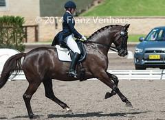 141024_2014_AUS_D_Champs_4619.jpg (FranzVenhaus) Tags: horses performance sydney australia competition event nsw athletes aus equestrian riders dressage siec
