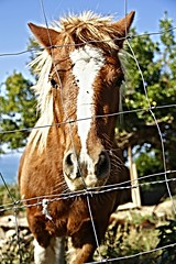 talaia bidea (Unai Huizi) Tags: caballo mar san sebastian pedro pony otoño monte potro ulia gipuzkoa itsasoa udazkena behorra talaia