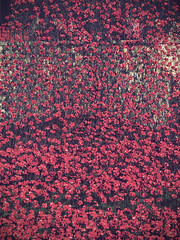 Field of Remembrance (davepickettphotographer) Tags: city uk red sea london tower field memorial war hill great wave olympus poppies gb lands remembrance 1914 toweroflondon westminister cityoflondon em1 19141918 olympuscamera cityofwestminister bloodswept