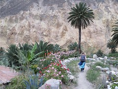 Colca Canyon-61