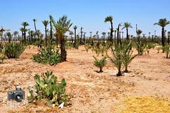 Jardins de la Palmeraie - Marrakesh (ShaunMYeo) Tags: morocco maroc marrakech marrakesh marruecos marokko marrocos fas marokas marokkó maroko مغربي марокко jardinsdelapalmeraie