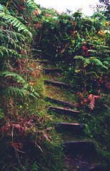 staircase into the forest (I. AKHTAR) Tags: life travel summer england travelling nature fashion youth stairs rural forest photography woods cornwall escape natural britain explorer lifestyle adventure explore filmschool boho cinematic disposable artschool artstudent filmstudent tumblr photographylife photographersontumblr originalphotographers iakhtar ikywork