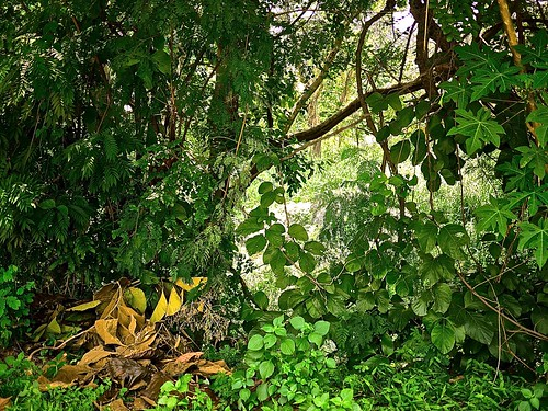 vegetation near the very base of doi suthep, chiang mai