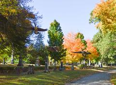 flight (Daisy B) Tags: autumn fall geese nikon october foliage 2014 nikond3200 foresthillscemetery
