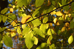 Herbst_Radtour_ADFC_11 (Oliver Deisenroth) Tags: autumn nature bicycle forest herbst wald cycletour herbststimmung